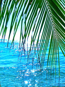 Water and Palm