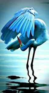 Egret