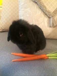 Loppy and carrot